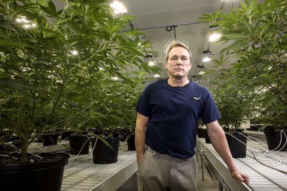Five Years Later, the First Pot Stock Is Up 2,139% Since Its Debut