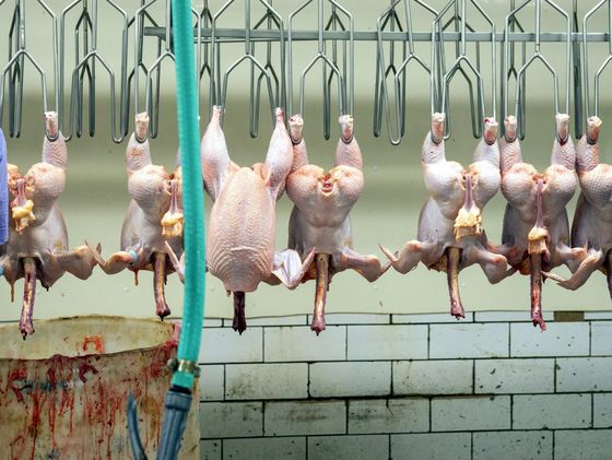 You Eat Meat From Factory Farms. Why Not a Lab?