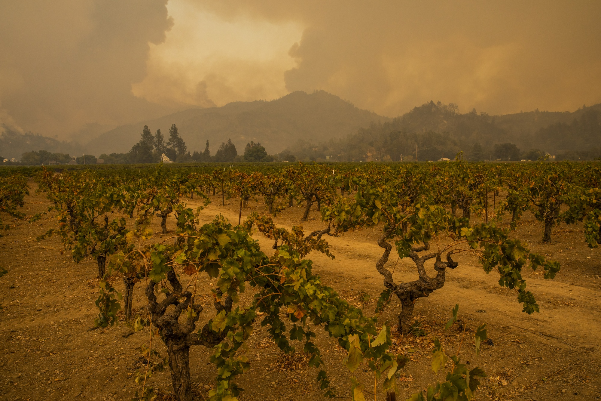 Fires Erupt in California Wine Country, Fueled By Hot, Dry Winds