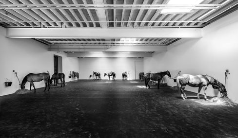 Untitled (12 Horses) on view at Gavin Brown's Enterprise in NYC. The horses leave daily at 6 p.m.