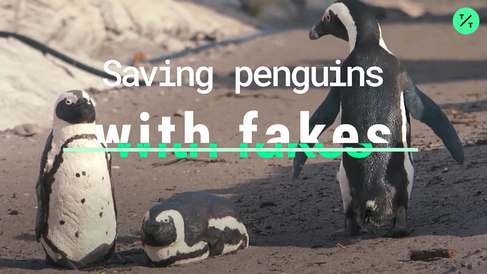 Saving Penguins With Fakes
