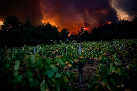 An Estimated 80% of Napa's Cabernet May Be Lost to Fire and Smoke