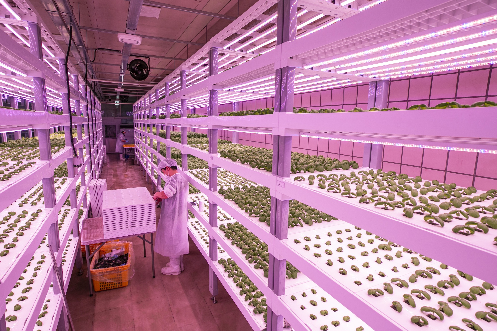 Korean Smart Farm Start-up Farm 8