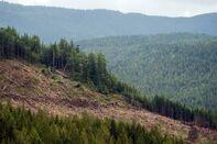 Law Enforcement Removes Fairy Creek Logging Blockades