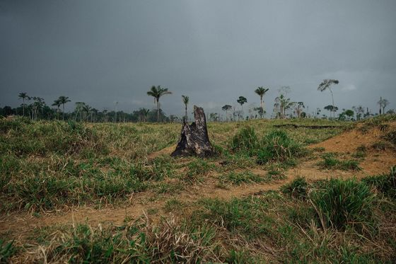The Amazon Is Fast Approaching a Point of No Return