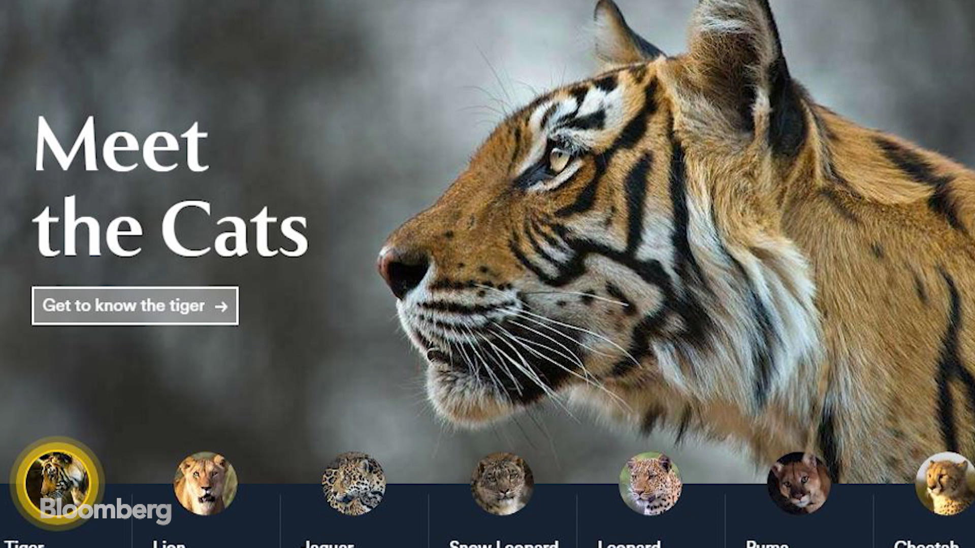 Saving the Big Cats Is the 'First Real Love' of Investor Thomas Kaplan