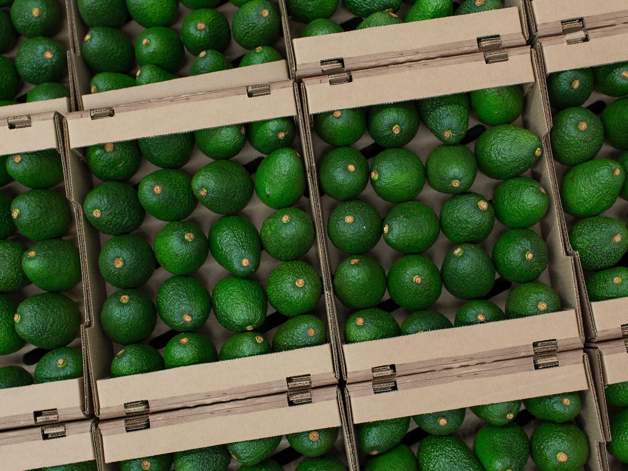 Trump Threats Stir Up Opaque Avocado Market From Mexico to