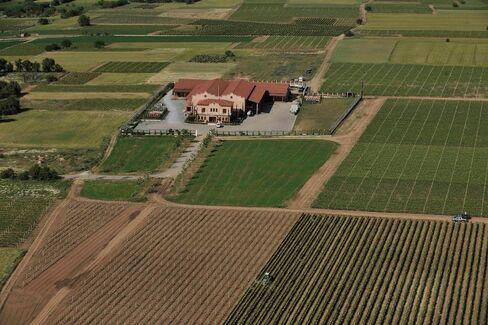 Alpha Estate vineyard in Amyndeon.