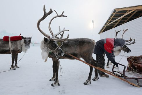 Reindeer in eastern Siberia.