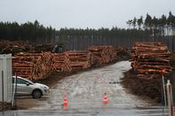 Tesla Inc. Gets Go-Ahead to Resume Clearing Forest in Germany