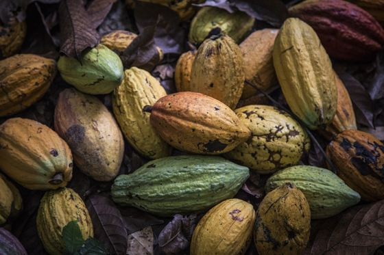 Cocoa Crisis Hits Top Grower's Exporters as Banks Curb Loans