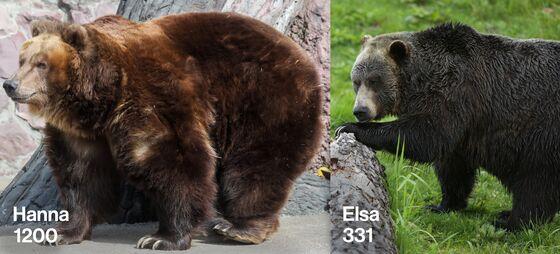 Kominers's Conundrums: Overstuffed Bears Seeking Stability