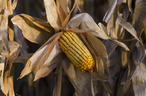 Corn Joins Bear Market for Crops as Demand Slows, Planting Gains