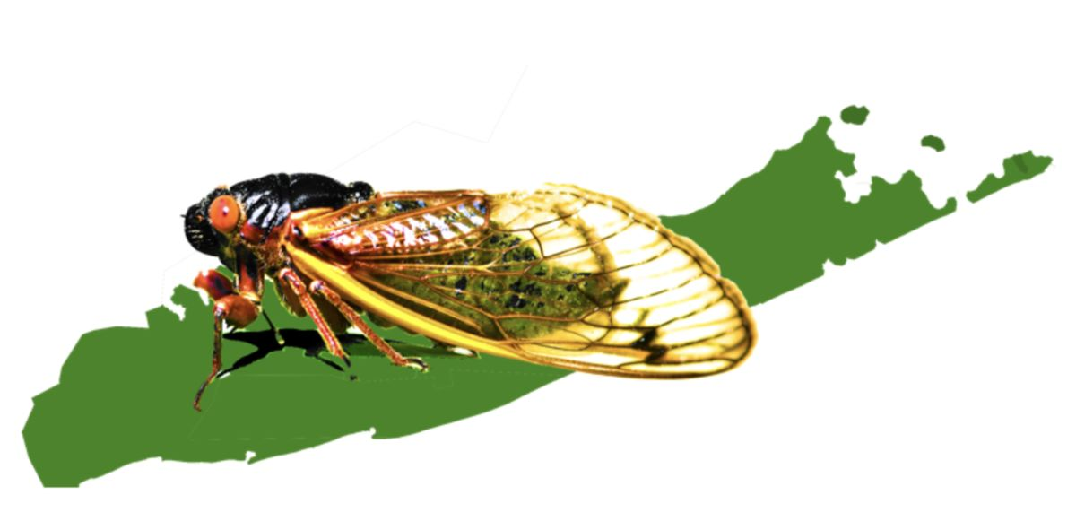 To Map Billions of Cicadas, It Takes Thousands of Citizen Scientists