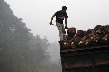 A worker sorts bunches of harvested oil palm fruit on a truck as haze surrounds the area in Riau Province, Indonesia.