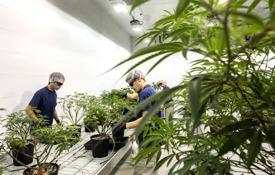 Big Money Tests Marijuana Waters, With Hedge Funds Leading Charge