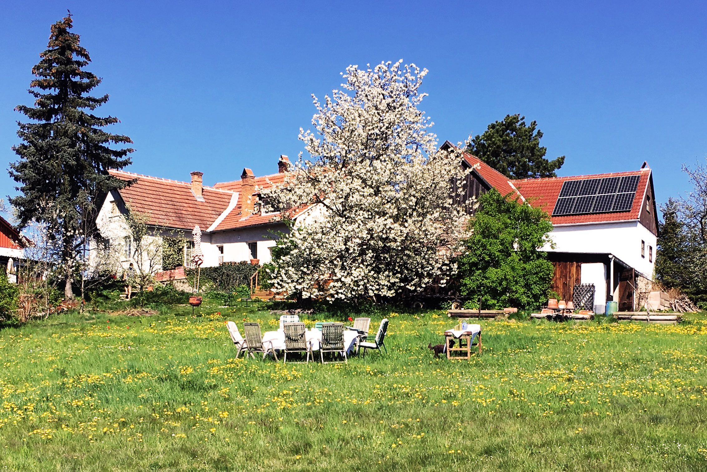 South-facing solar panels and cherry blossoms at an old farmhouse in Austria