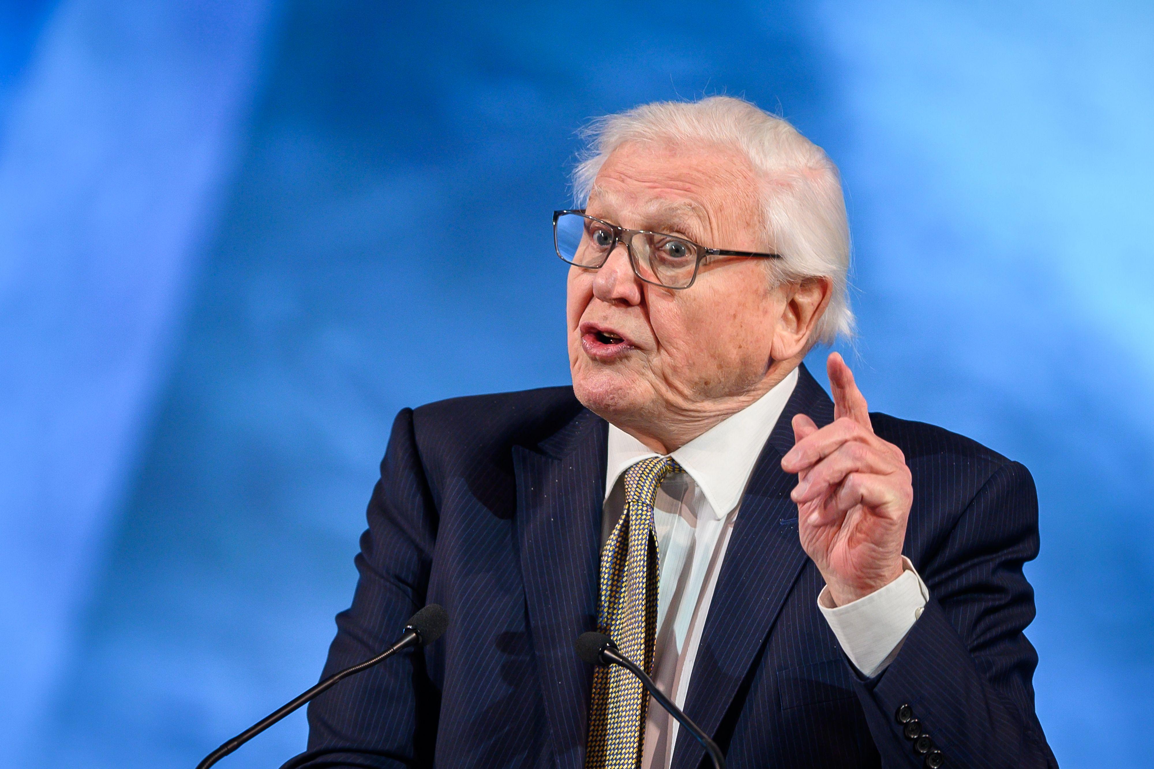 Sir David Attenborough Speaks at Davos - Bloomberg