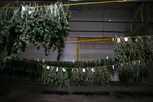 Colorado and Washington Try to Figure Out How to Tax Marijuana