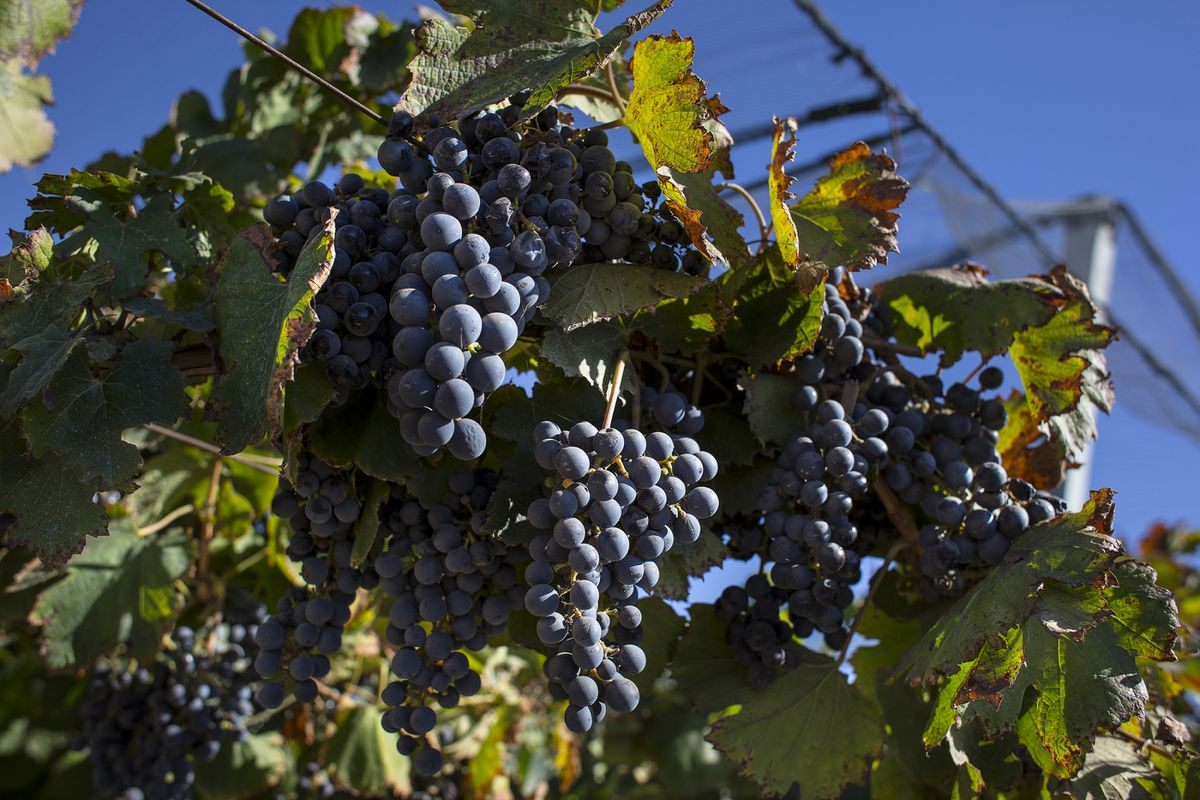 World's Smallest Wine Vintage Since 1961 May Lift Booze Prices - Bloomberg