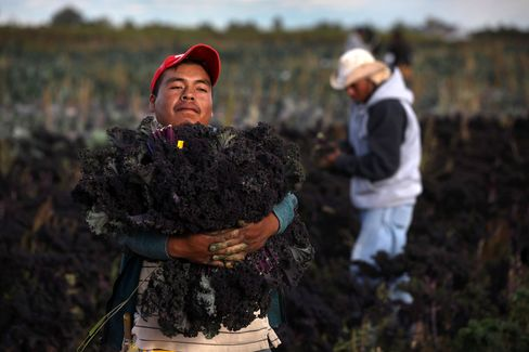 Migrant Workers in Colorado