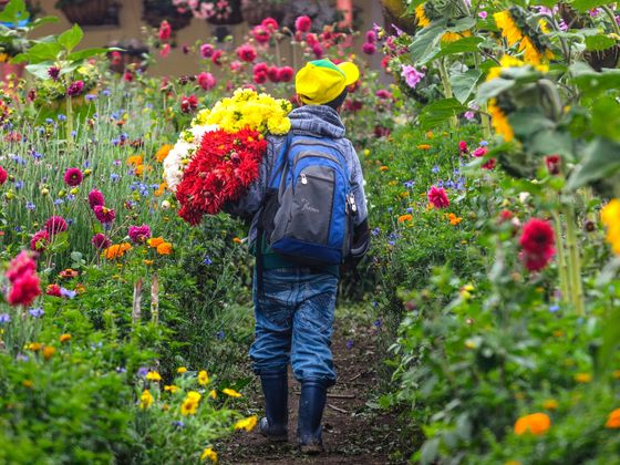 The Extraordinary Journey of Your Mother's Day Flowers
