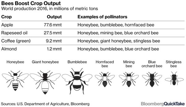 Bee Blight - Bloomberg