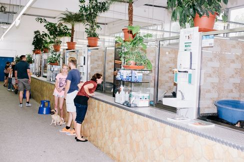 Zoo Zajac is the only pet store in Germany where customers can buy a dog.