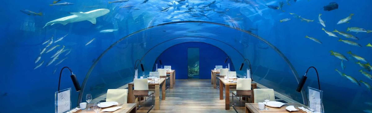 Nine of the Most Extreme Dining Experiences Money Can Buy