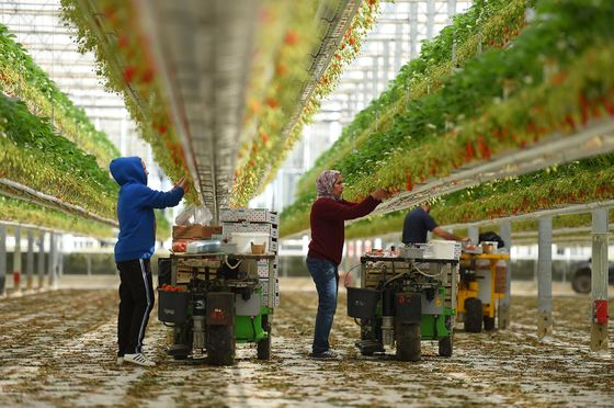 From Spain to Germany, Farmers Warn of Fresh Food Shortages