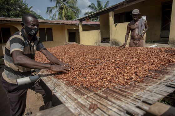 Big African Cocoa Crop Makes Chocolate Rebound More Crucial