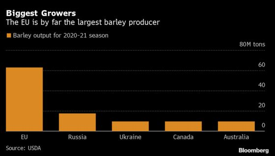 As Beer Market Collapses, Prime Barley Risks Becoming Pig Food
