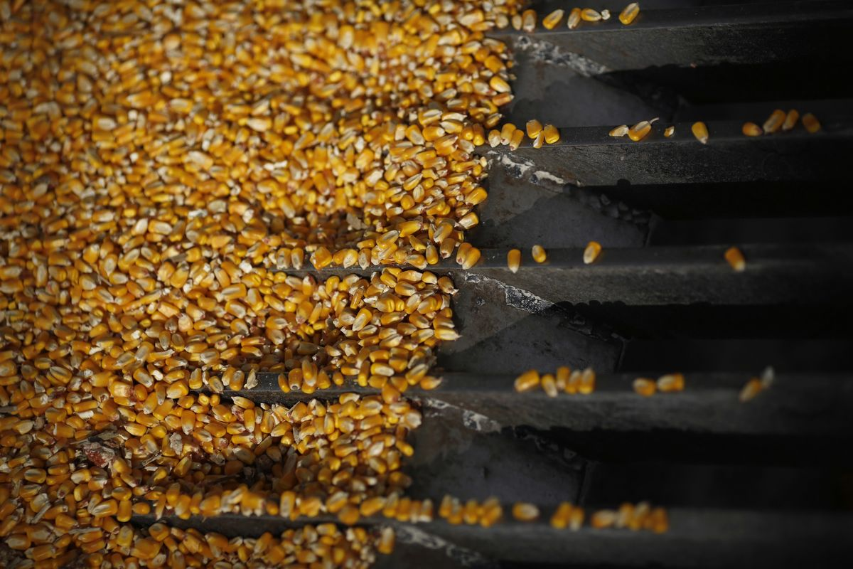 The Latest Sign of a U.S.-China Trade Truce: Corn