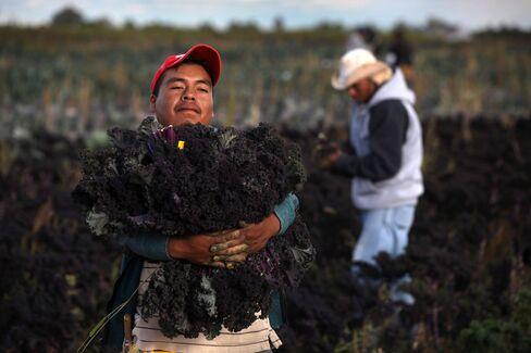 Senators Say Farmworker Deal Near as Immigration Timing Slips