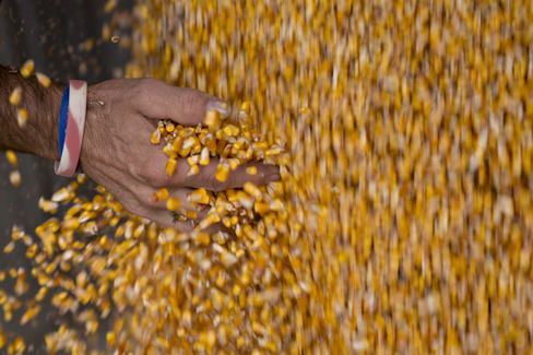 U.S. Corn Inventories Fall 12% From Year Earlier, USDA Says