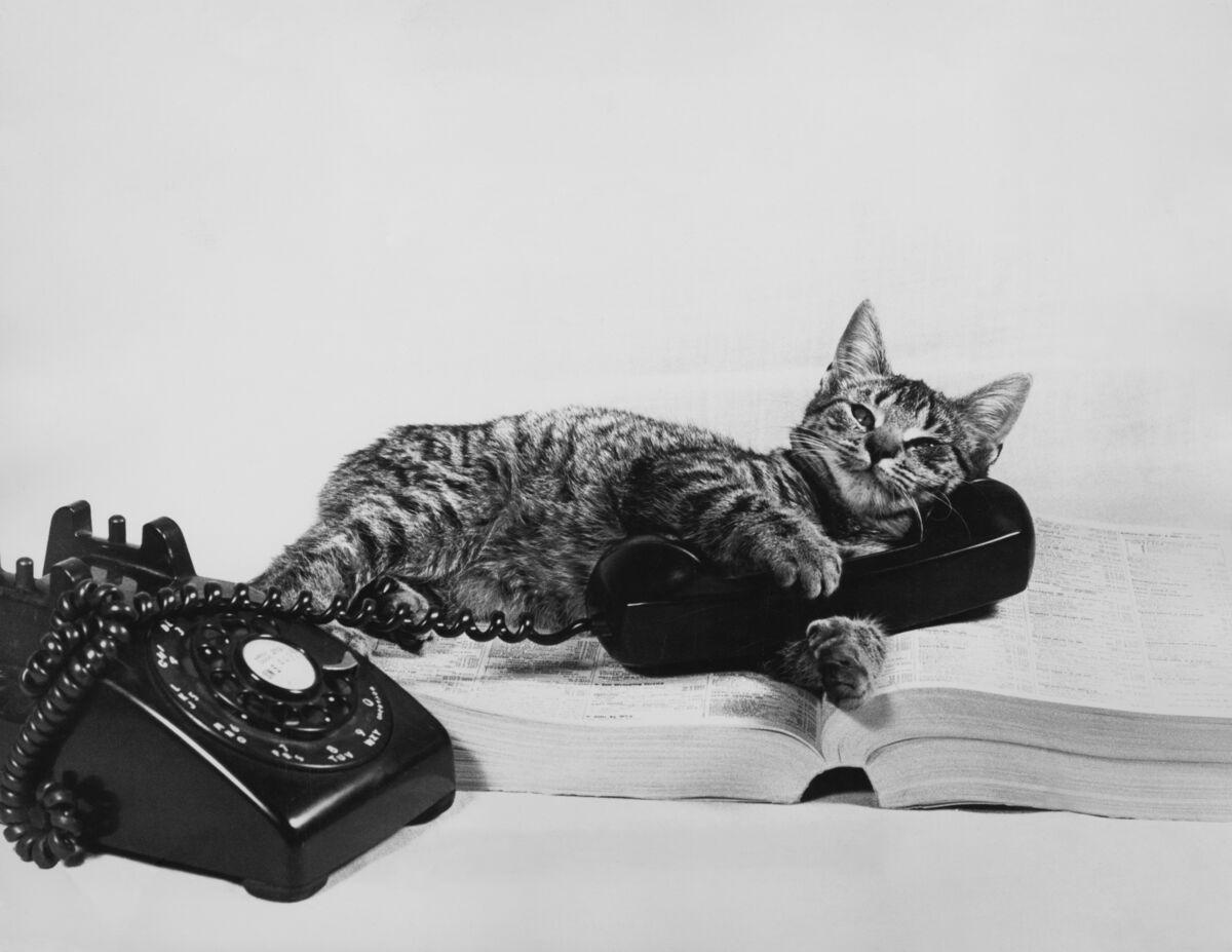 полностью прикольные картинки кошек с телефоном опыт наших