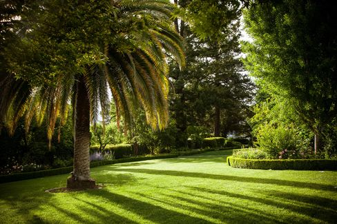 A view of the property, with its smooth green lawns dotted with giant palms and ginkgo trees.