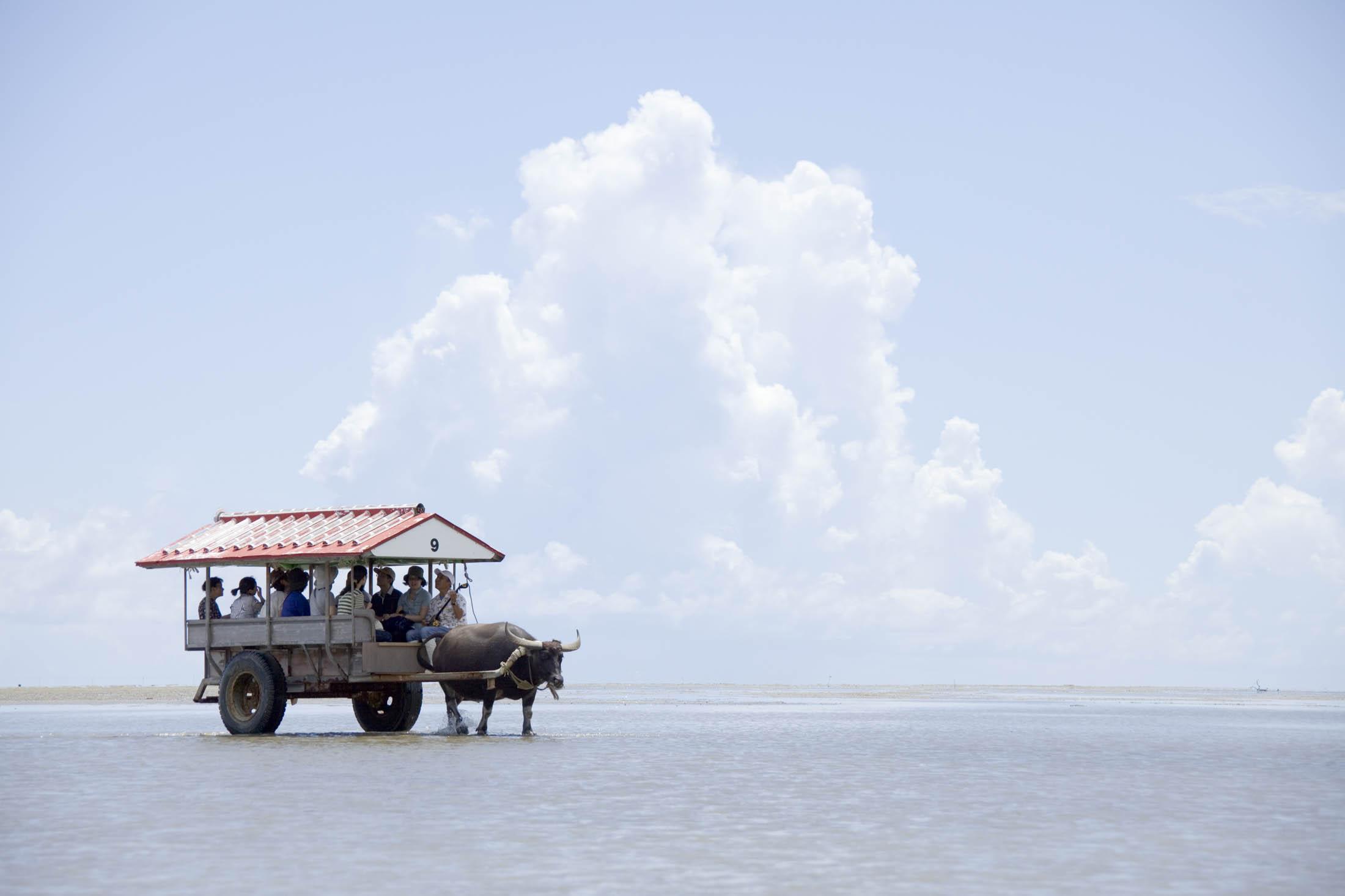 Water Buffalo Taxi, Yubu