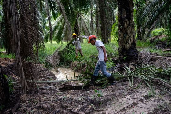 Biofuel, Supply and EU Focus Minds as Palm Oil Players Meet
