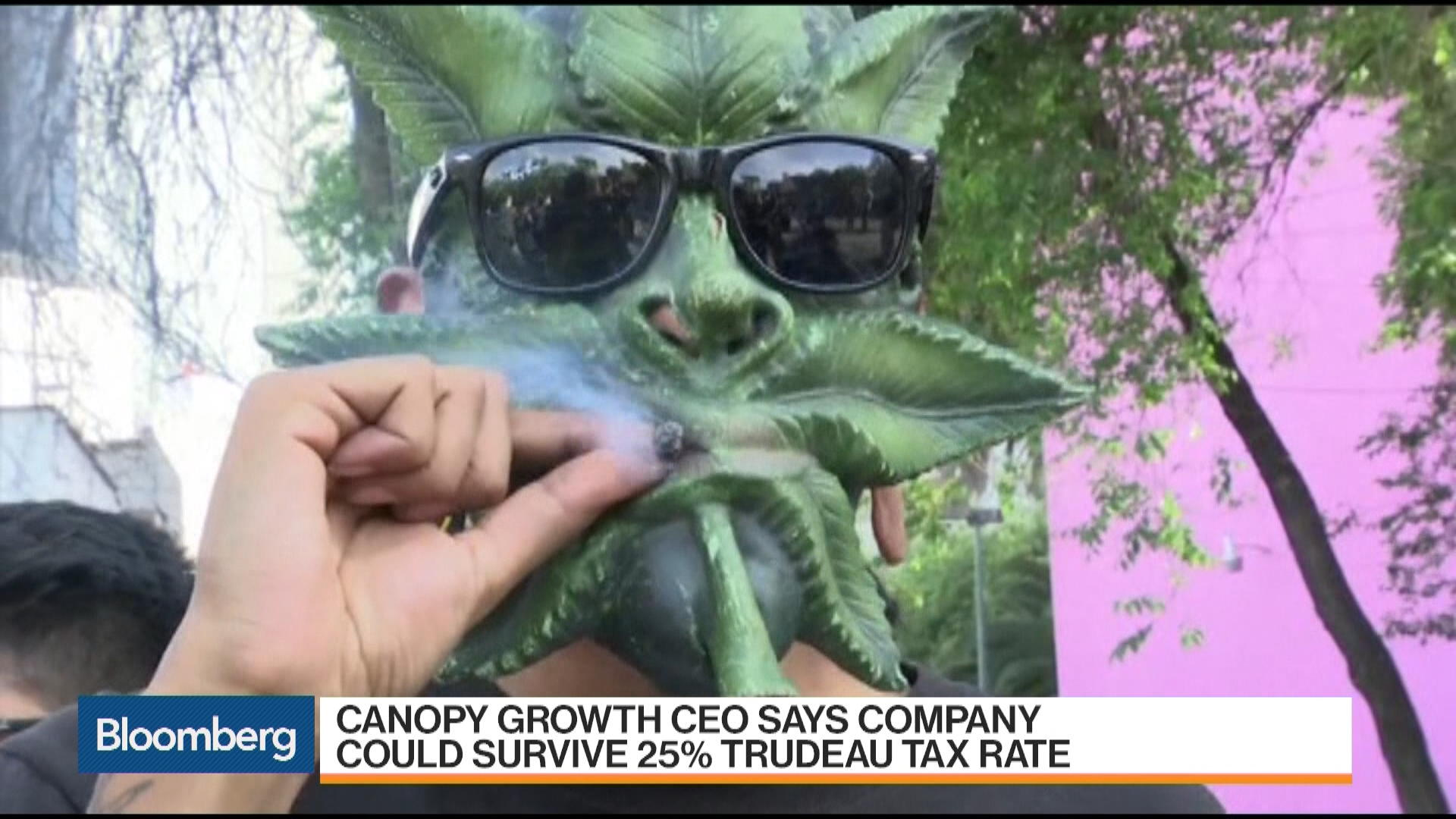 Canada Examines Possible Legal Weed System