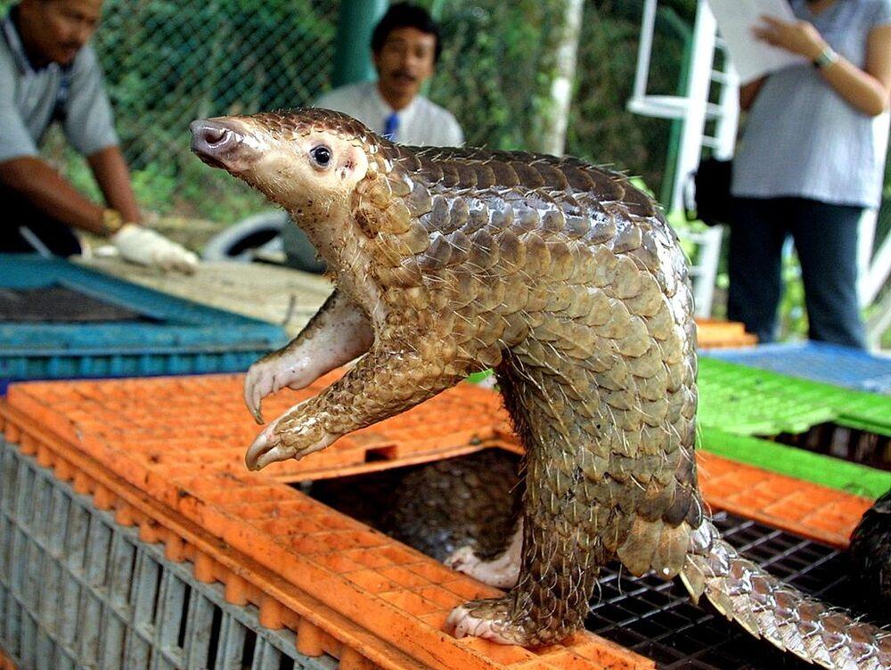 Coronavirus Source: China's Wildlife Demand Is Public Health Risk -  Bloomberg