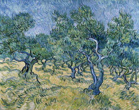 'Olive Grove'