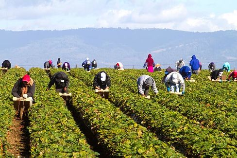 Undocumented Farmworkers Would Get a Fast Track to Citizenship. Why?
