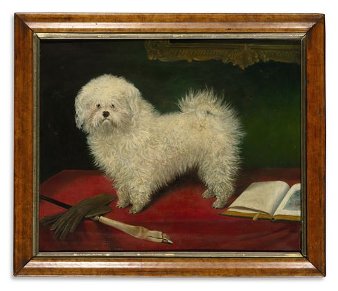 'A Maltese on a Red Table Cloth'