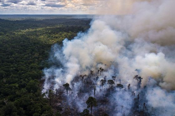 Bolsonaro Plans to Appease Investors With Ban on Amazon Fires