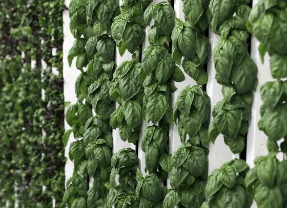 SoftBank-Backed Vertical Farm Is Opening Middle Eastern Facility
