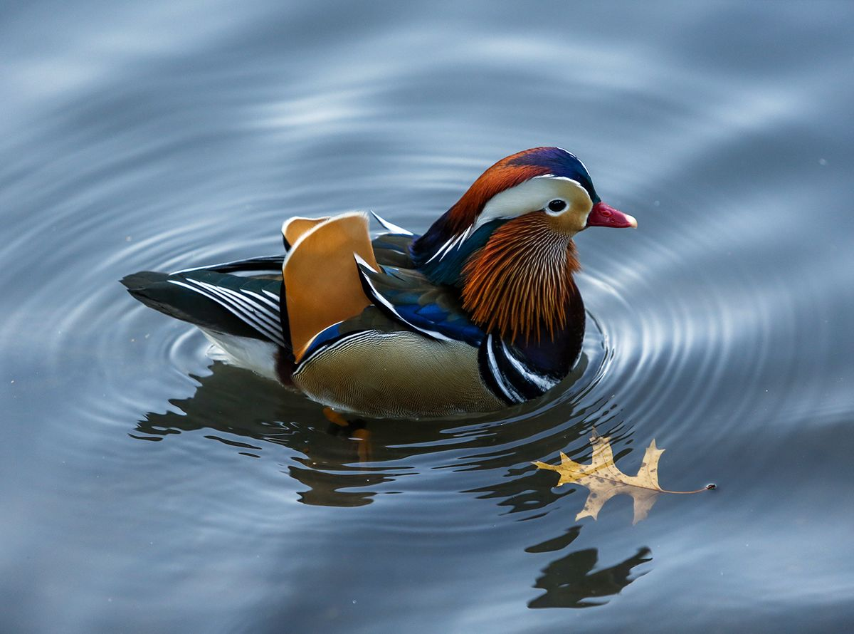 tesla mobile homes with Forget Black Swan Just Look To The Mandarin Duck Taking Stock on Spain Court Exempts Banks From Mortgage Tax In Ruling Reversal furthermore 76321684 furthermore Lexus 2018 Lc500 Review There Are Better Ways To Spend 100 000 moreover 67982 Tesla Grid Connected Powerpack Station  es Online California moreover Elon Musk Solar Roofs.