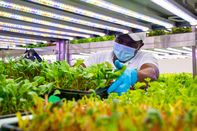 Indoor Farming's Success Depends on the Cheapest Lightbulb