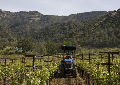 カリフォルニア州カリストガのアローホ・エステートのワイン畑