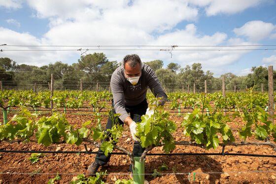 Winemakers Turn to Zoom Tastings to Survive Lockdown Strife